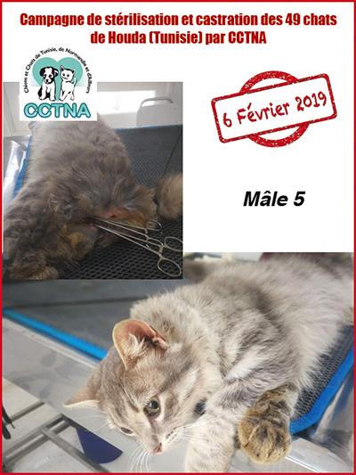 Aide CCTNA pour les animaux de HOUDA - Page 2 M5bis10