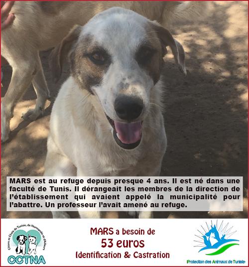 MARS 2019 : aide pour stériliser 8 chiens du refuge PAT Tunis Mars10