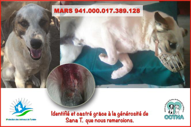 MARS 2019 : aide pour stériliser 8 chiens du refuge PAT Tunis Marsme11