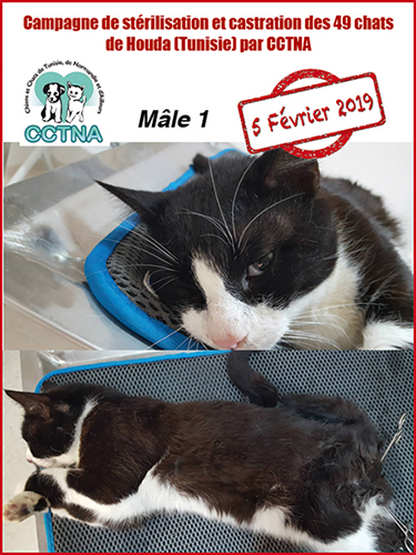 Aide CCTNA pour les animaux de HOUDA - Page 2 Mzele110