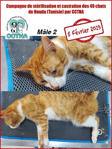 Aide CCTNA pour les animaux de HOUDA - Page 2 Mzele210