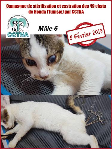 Aide CCTNA pour les animaux de HOUDA - Page 2 Mzele610