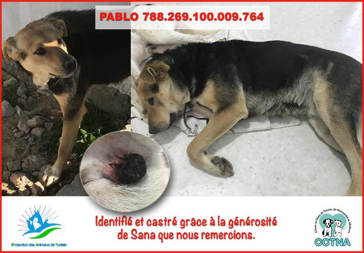 MARS 2019 : aide pour stériliser 8 chiens du refuge PAT Tunis Pablom10