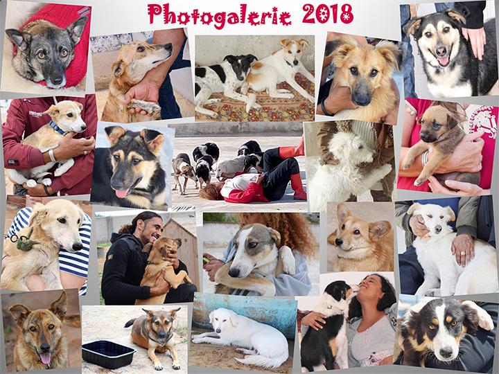 Les heureux adoptés au Luxembourg - 2018 Photog10