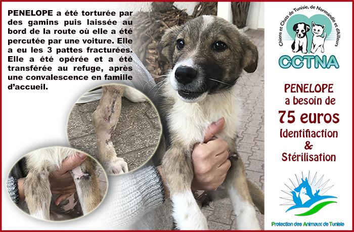 JANVIER 2019 : Aide pour stériliser 6 chiens femelle du refuge de la PAT Pzonzo10