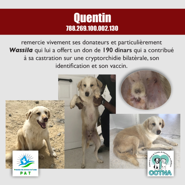 Aide pour stériliser 22 chiens du refuge de la PAT Quenti10