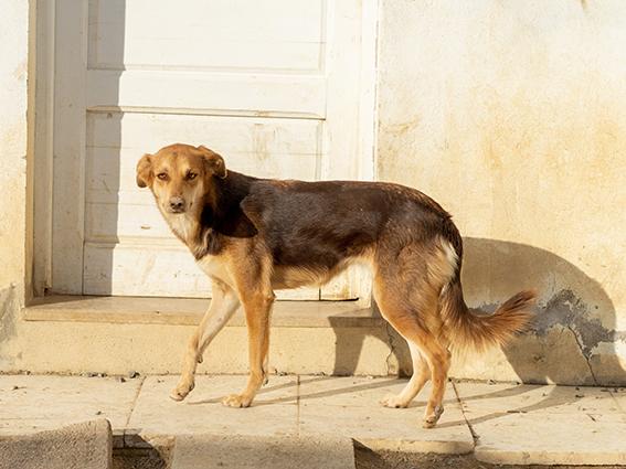 CHOCOLINE, identifiée 941.000.023.236.590, en refuge à Tunis Skz01112
