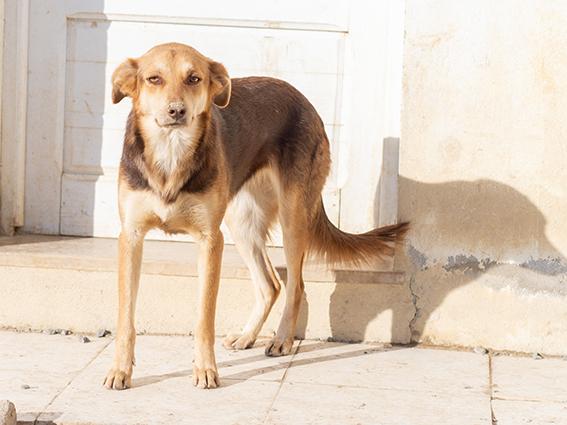CHOCOLINE, identifiée 941.000.023.236.590, en refuge à Tunis Skz01113