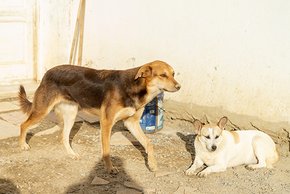 CHOCOLINE, identifiée 941.000.023.236.590, en refuge à Tunis Skz01114