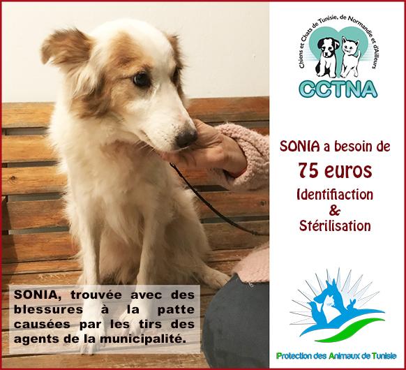 JANVIER 2019 : Aide pour stériliser 6 chiens femelle du refuge de la PAT Sonia010