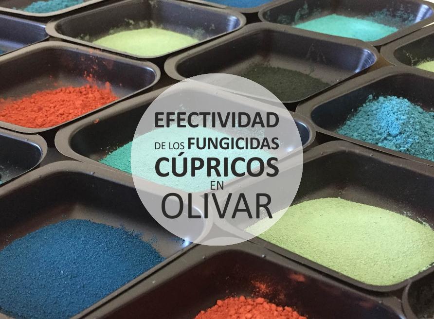 Efectividad de los fungicidas cúpricos en olivar  Efecti10