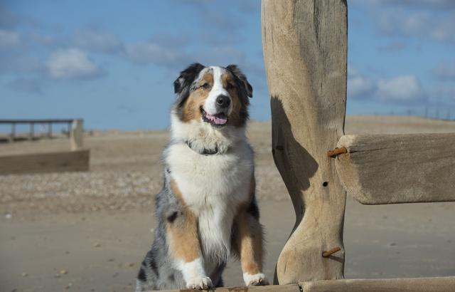 Quel est le chien préféré des Français? 640x4113
