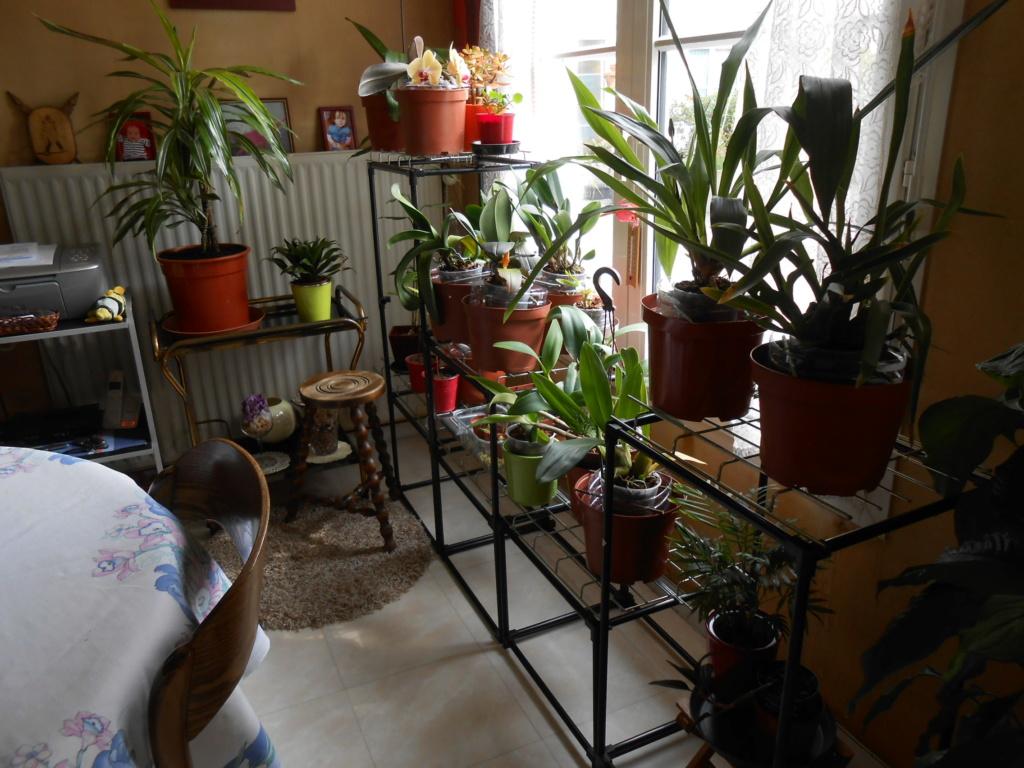 ma véranda, mon petit paradis végétal ... - Page 3 14_20110