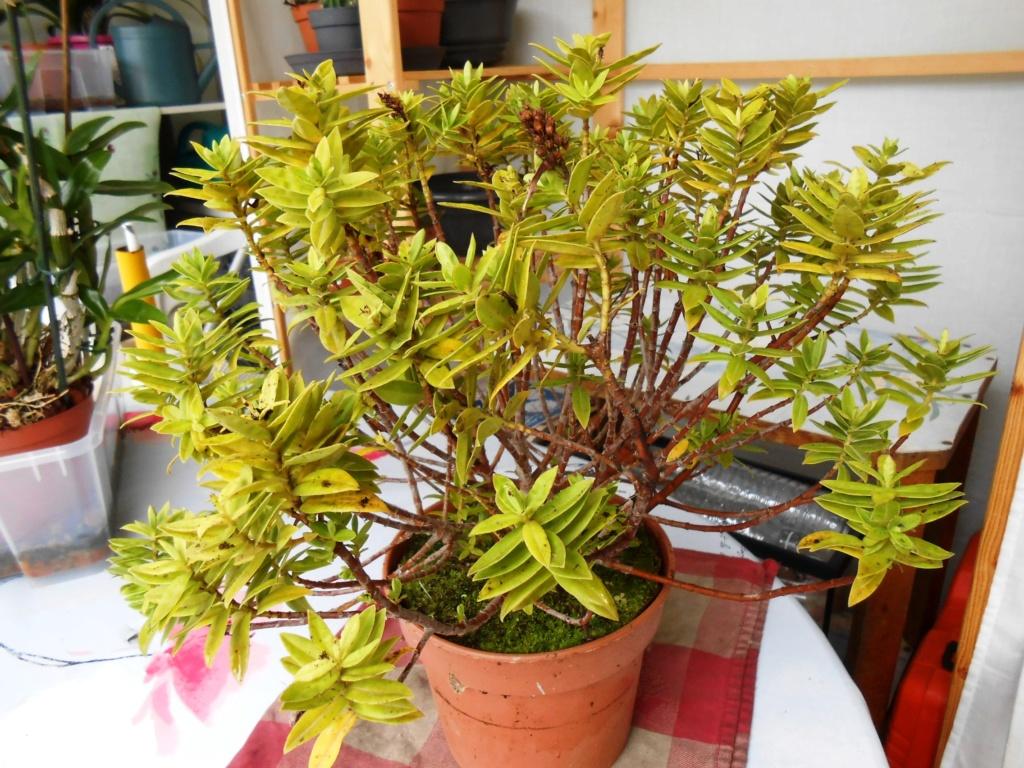Plante ou arbuste inconnu Dscn0010
