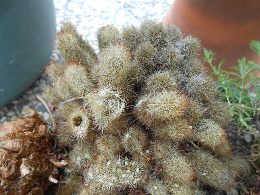 Encore des plantes sans nom !! Dscn9010