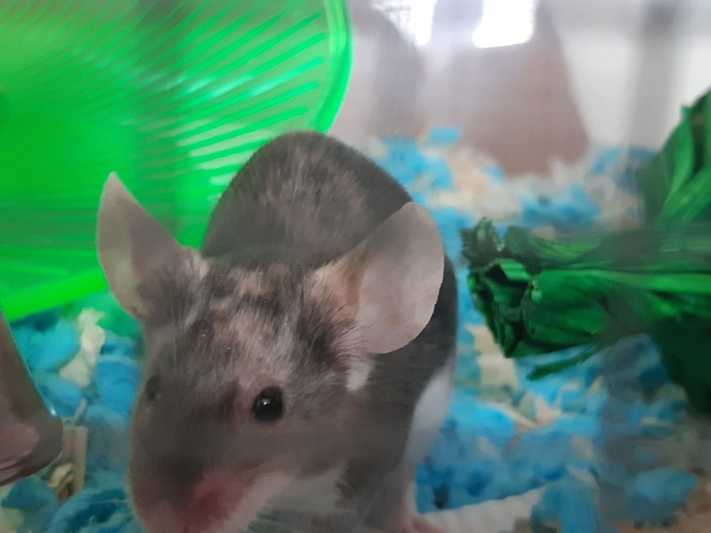 First time mouse owner =) 20200612