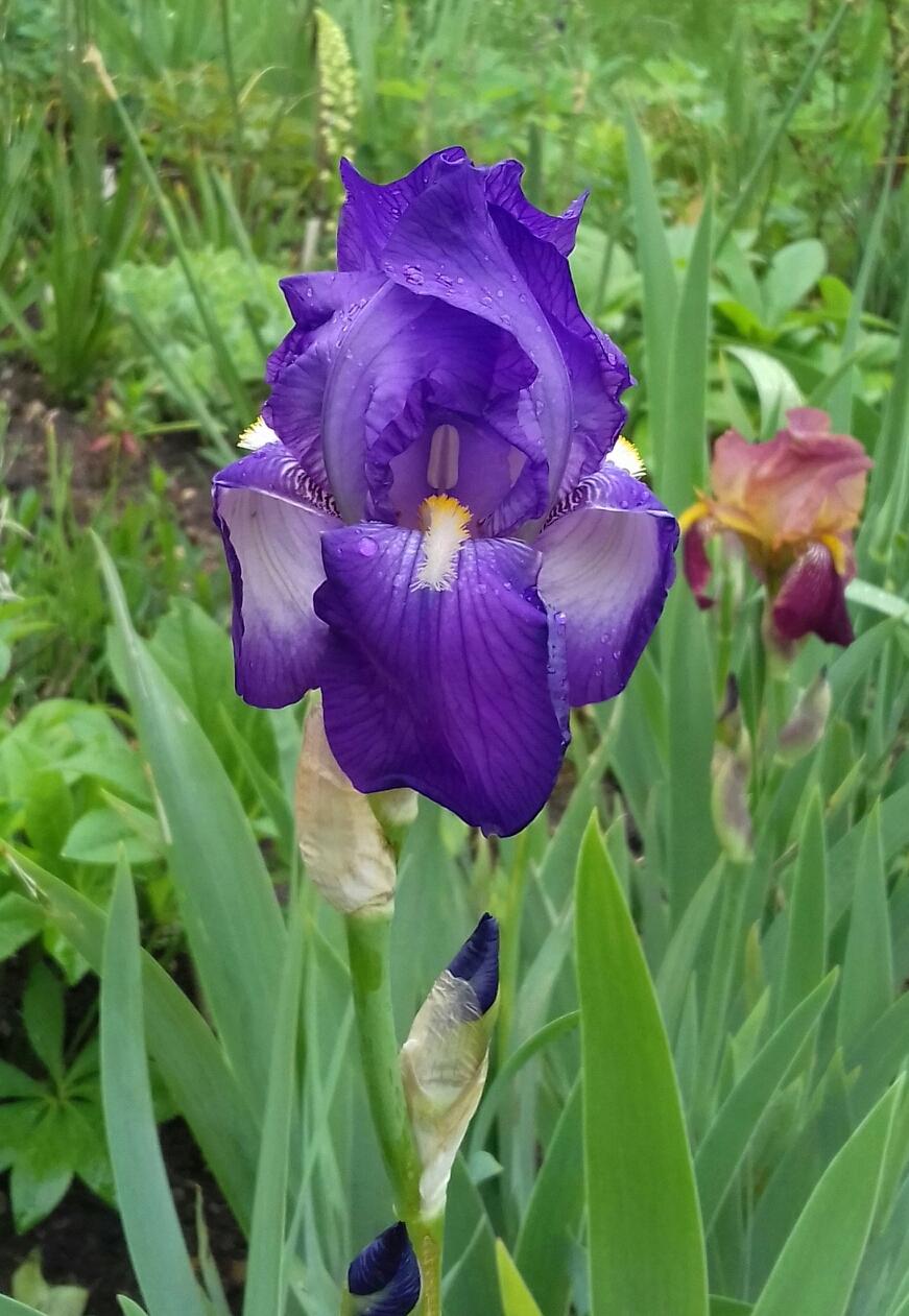Inconnu violet 20200510