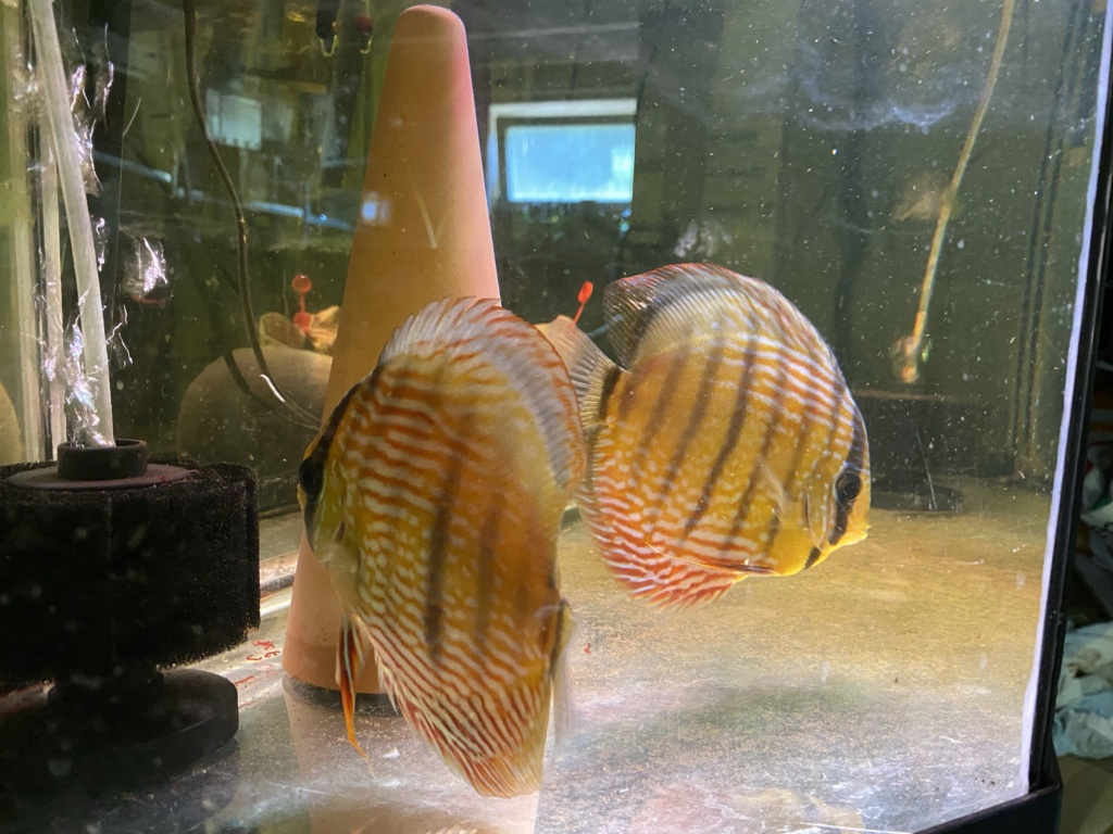 Projet Discus sauvages 1e2f1c10
