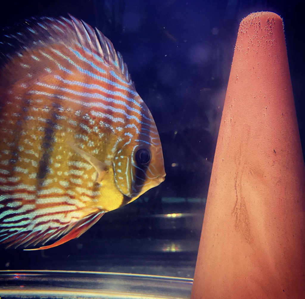 Projet Discus sauvages 4c220f10