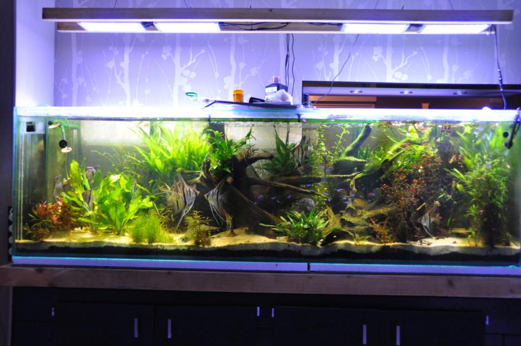 600L - Manacapuru - Santa Isabelle - Krobia  Dsc_0010