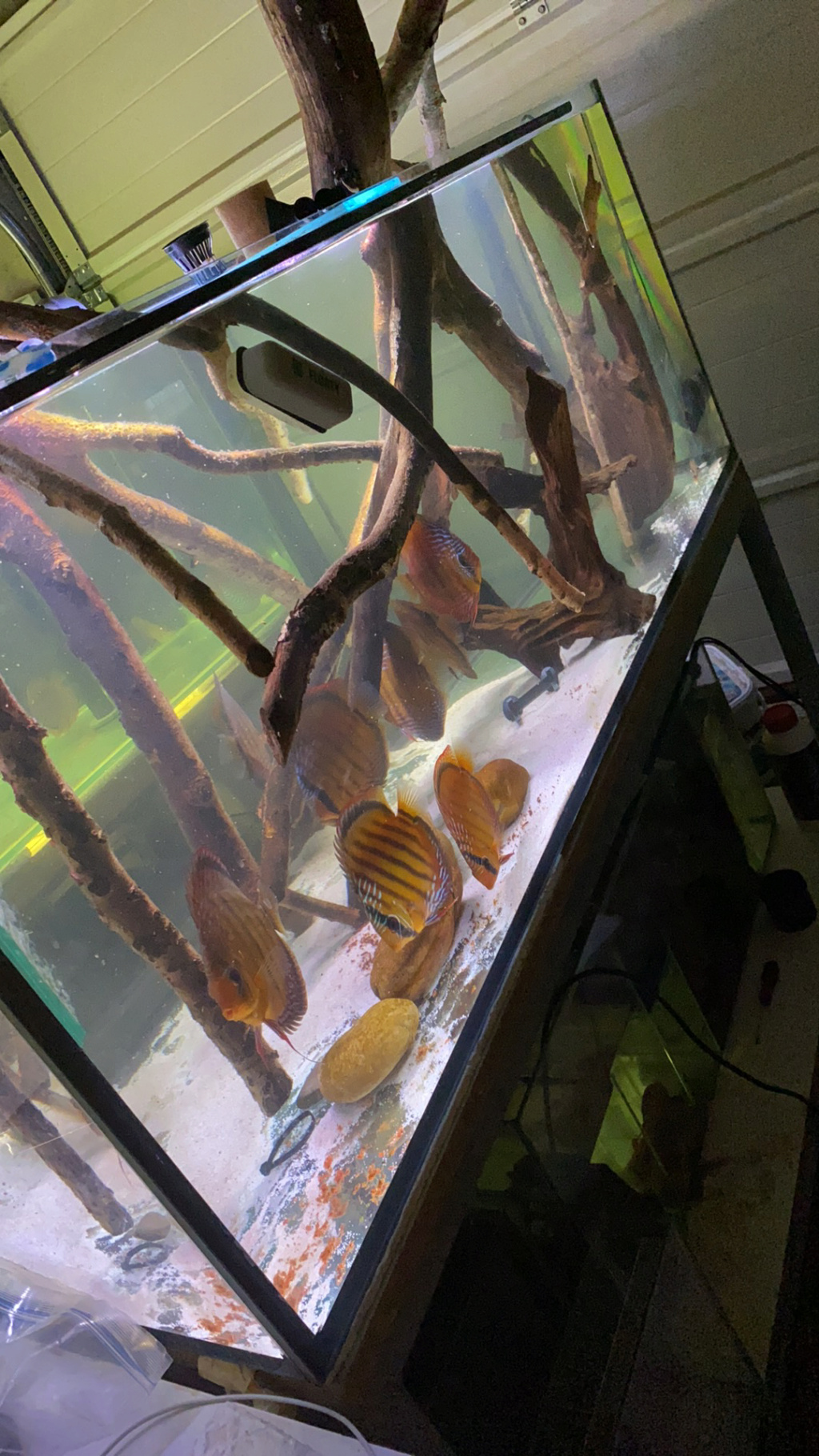 Projet Discus sauvages Img-6410