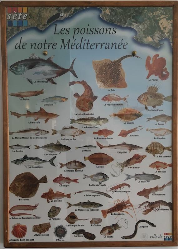 Sète, son port et son musée de la mer 21_aff10