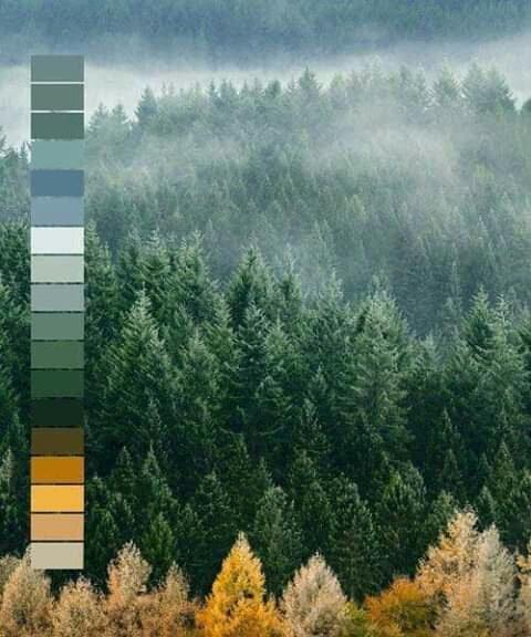 تناسق الألوان في الطبيعة Eeeoee49