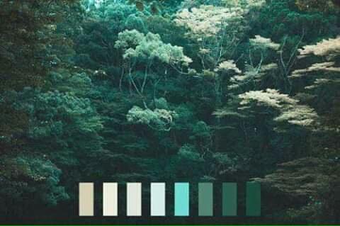 تناسق الألوان في الطبيعة Eeeoee55