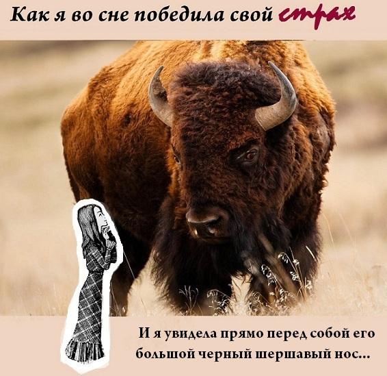 Коллекция сновидений _11u12