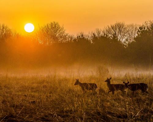 Tereny łowieckie Deer-a10