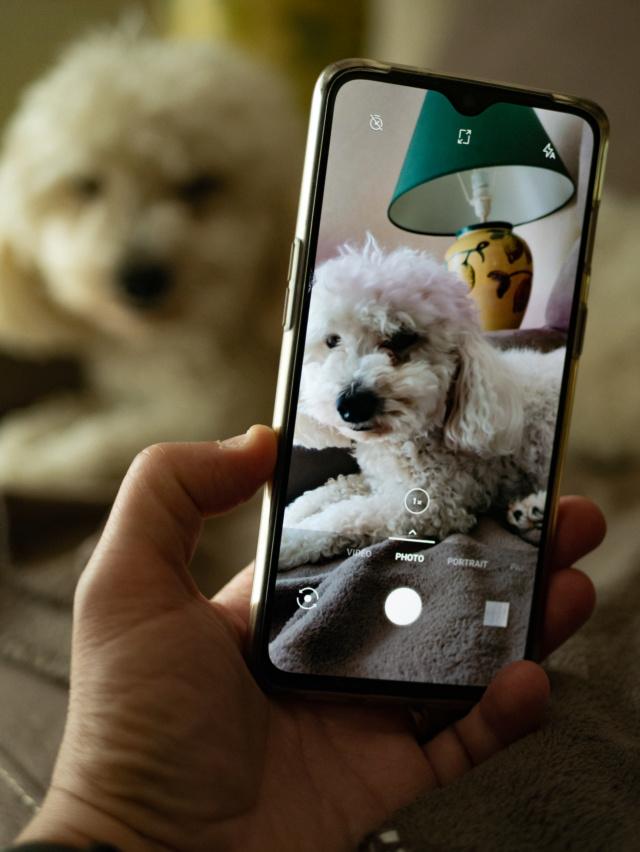Mon chien et le portable Jipsy11