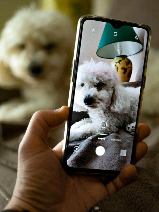 Mon chien et le portable Jipsy12