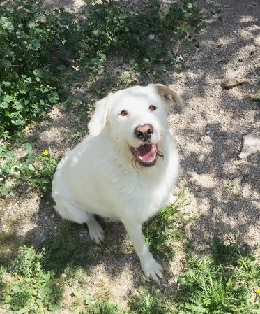 Bildertagebuch - THOR, kein Hund für Couchpotatoes - ÜBER ANDERE ORGA VERMITTELT - 001_110