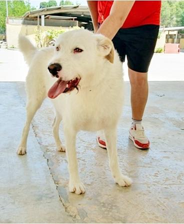 Bildertagebuch - THOR, kein Hund für Couchpotatoes - ÜBER ANDERE ORGA VERMITTELT - 00211