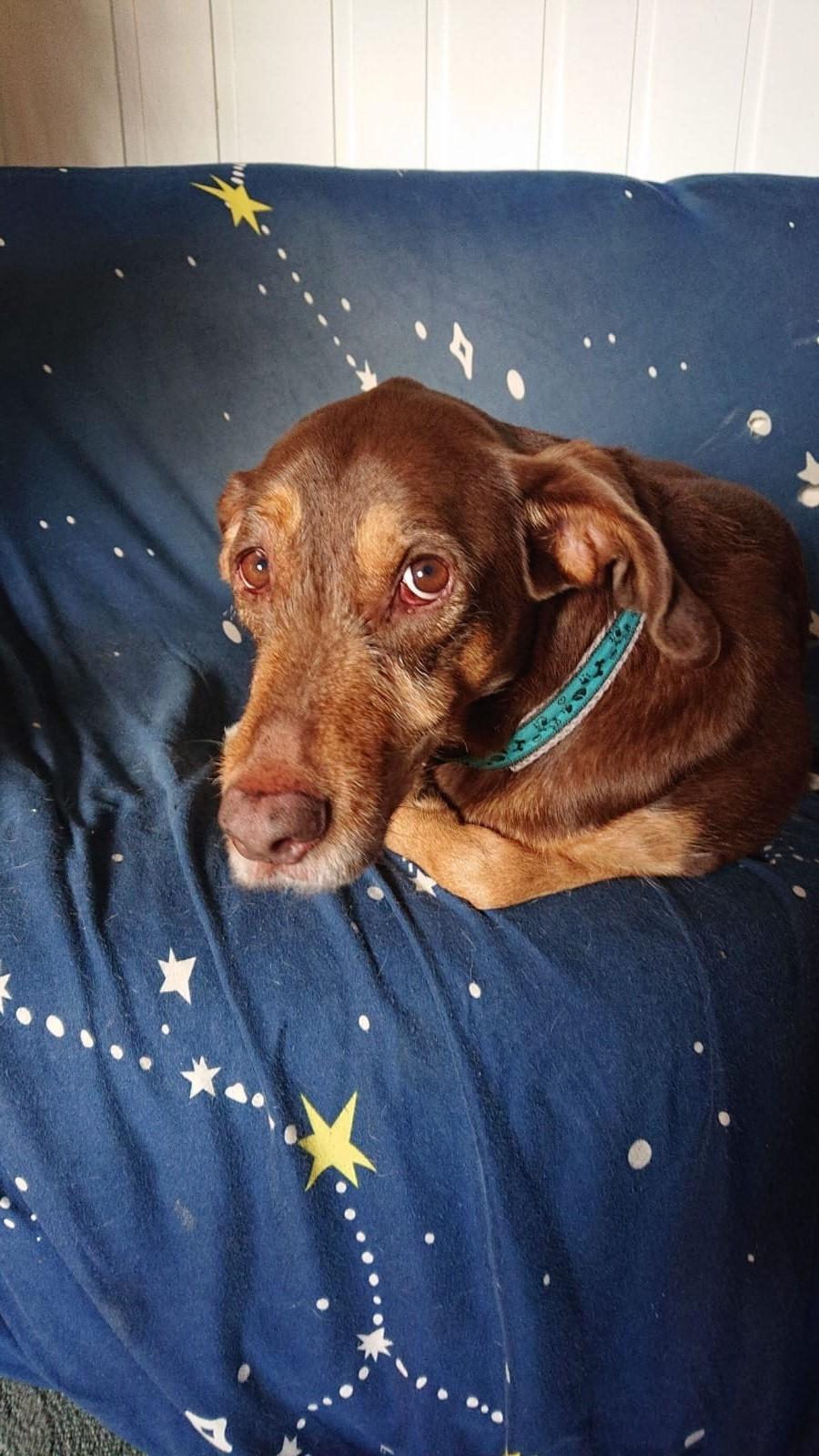 !! EILIG !! Xoco (jetzt Joey) sucht ein neues Zuhause oder Pflegestelle - VERMITTELT - 0313