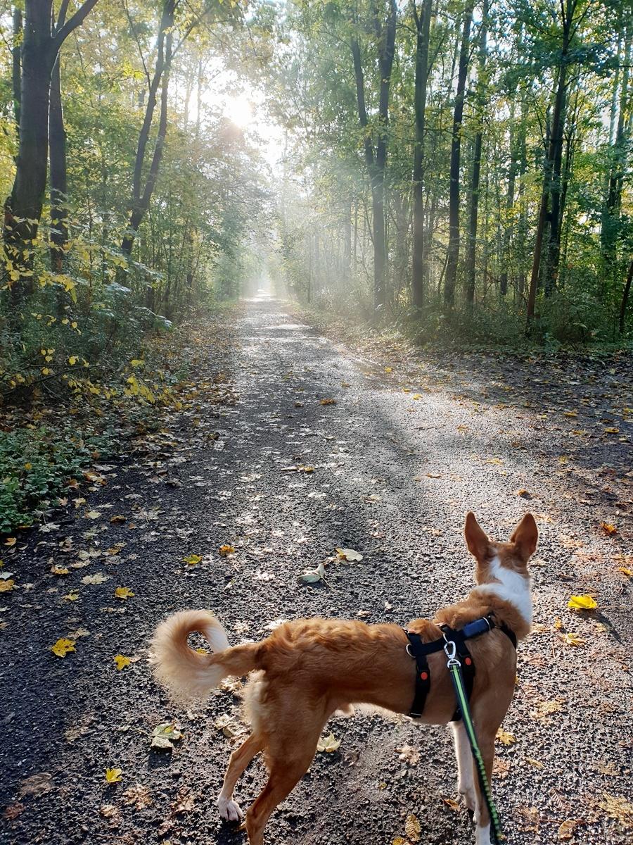 Bildertagebuch - TRECE, ein Traumhund - VERMITTELT - 20191110