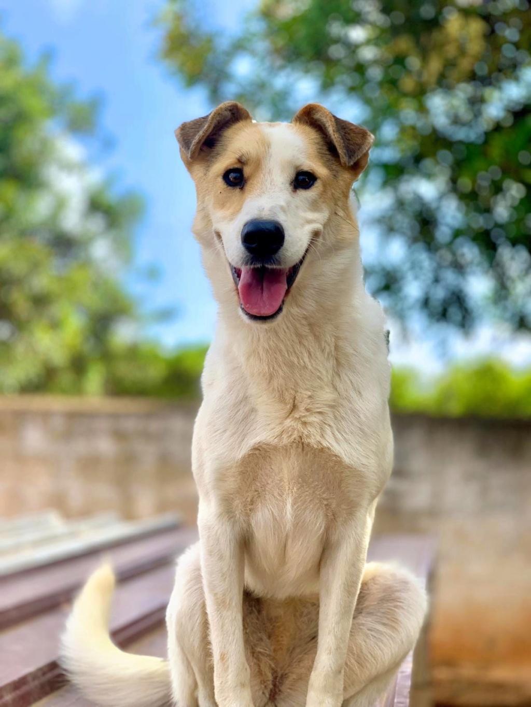 Bildertagebuch - Zarza, möchte ein stattliches Hundemädchen werden - ÜBER ANDERE ORGA VERMITTELT - 3fd4e510