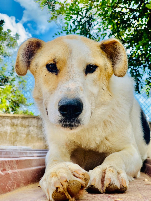 Bildertagebuch - Zarza, möchte ein stattliches Hundemädchen werden - ÜBER ANDERE ORGA VERMITTELT - 790d2310