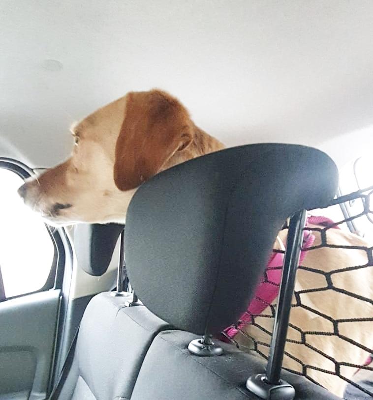 buster - Bildertagebuch - BUSTER, ein Traumhund wurde streunend aufgefunden - VERMITTELT - Buster10