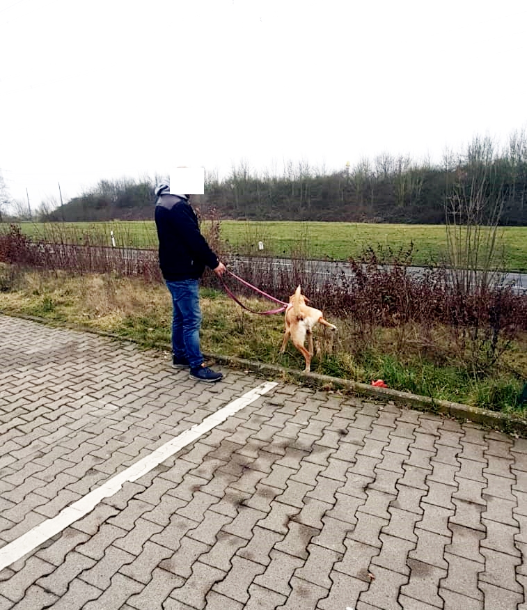 Bildertagebuch - BUSTER, ein Traumhund wurde streunend aufgefunden - VERMITTELT - Buster11