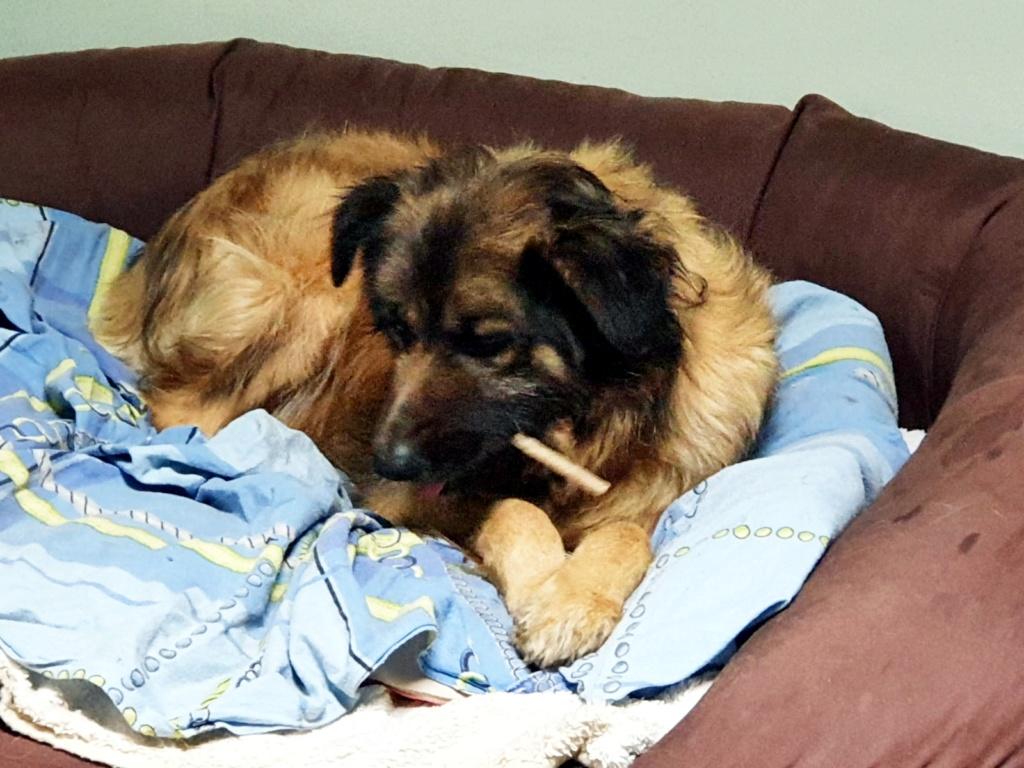 Bildertagebuch - SIRIUS, intelligenter hübscher Hundestern möchte so gerne endlich ein Zuhause - VERMITTELT - Img-2029