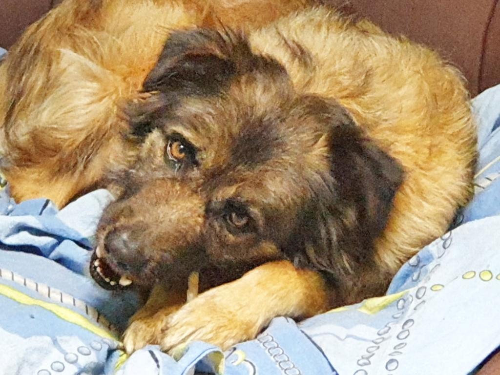 Bildertagebuch - SIRIUS, intelligenter hübscher Hundestern möchte so gerne endlich ein Zuhause - VERMITTELT - Img-2030
