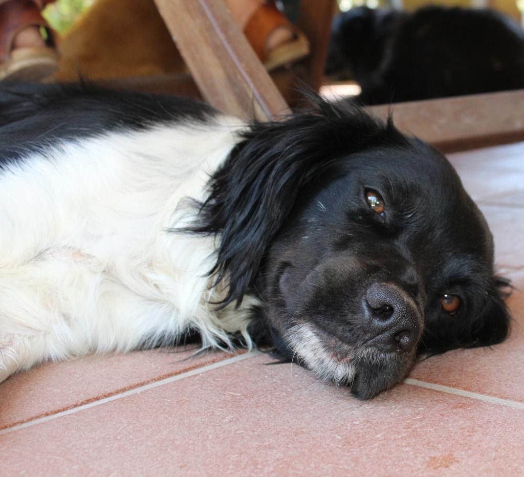 Bildertagebuch - IMBO wurde von einer Tierschützerin einsam und verlassen gefunden - VERMITTELT -  Img_0711