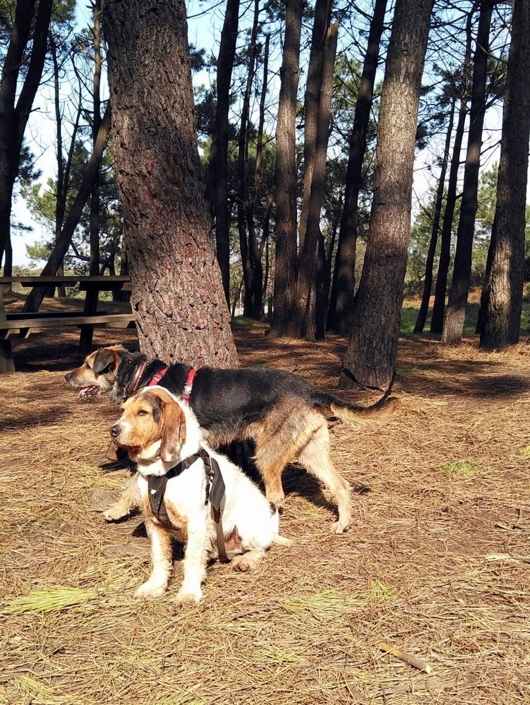 Bildertagebuch - RUNA hat eine traurige Vergangenheit als Kettenhund..... Runa10