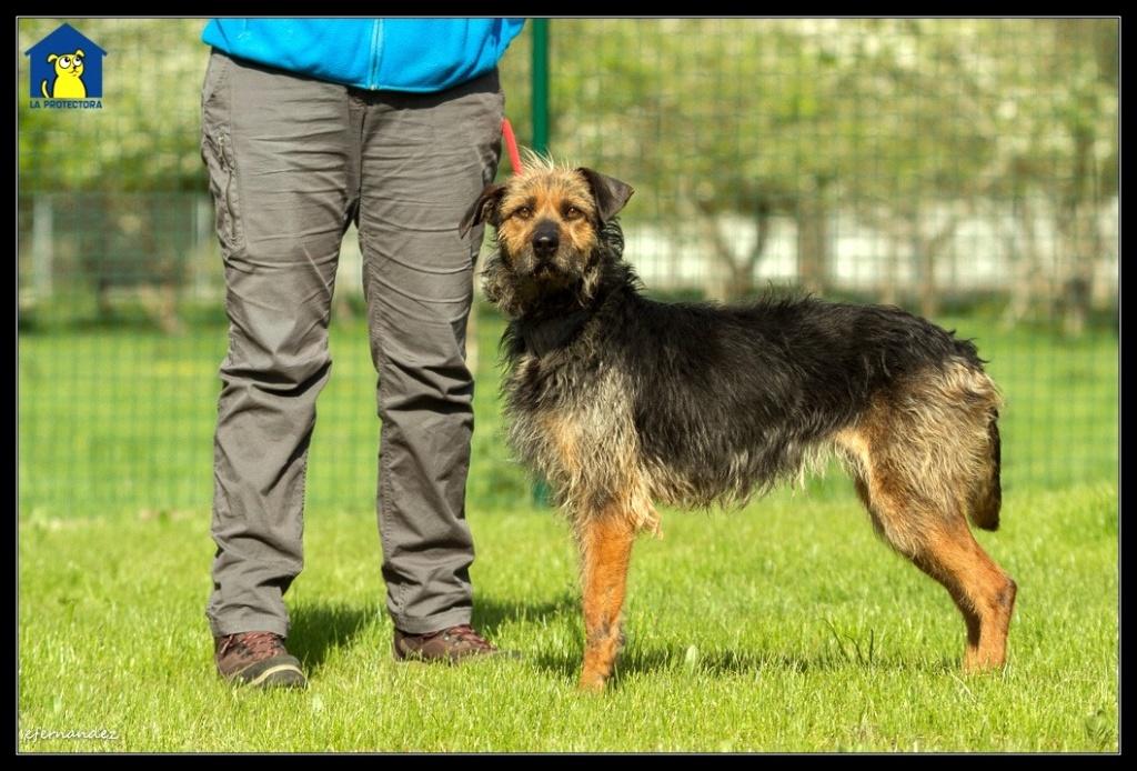 Bildertagebuch - RUNA hat eine traurige Vergangenheit als Kettenhund..... Runa210