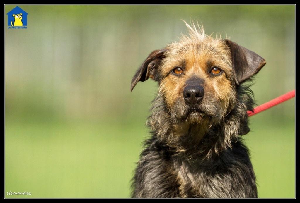Bildertagebuch - RUNA hat eine traurige Vergangenheit als Kettenhund..... Runa310
