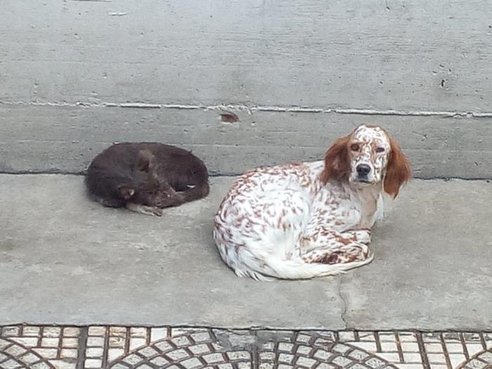 Bildertagebuch - SOPHIE wurde auf der Strape in Neapel gefunden - ÜBER ANDERE ORGA VERMITTELT - Sophie10
