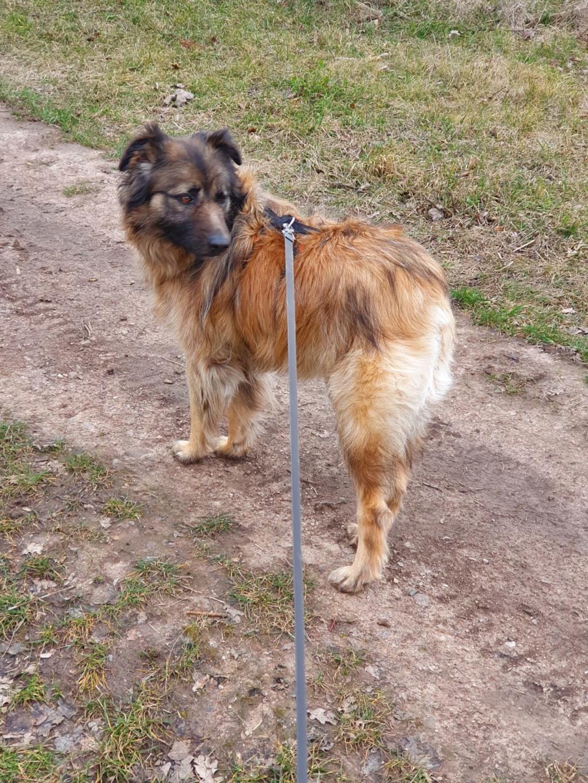 Bildertagebuch - SIRIUS, intelligenter hübscher Hundestern möchte so gerne endlich ein Zuhause - VERMITTELT - Whatsa28