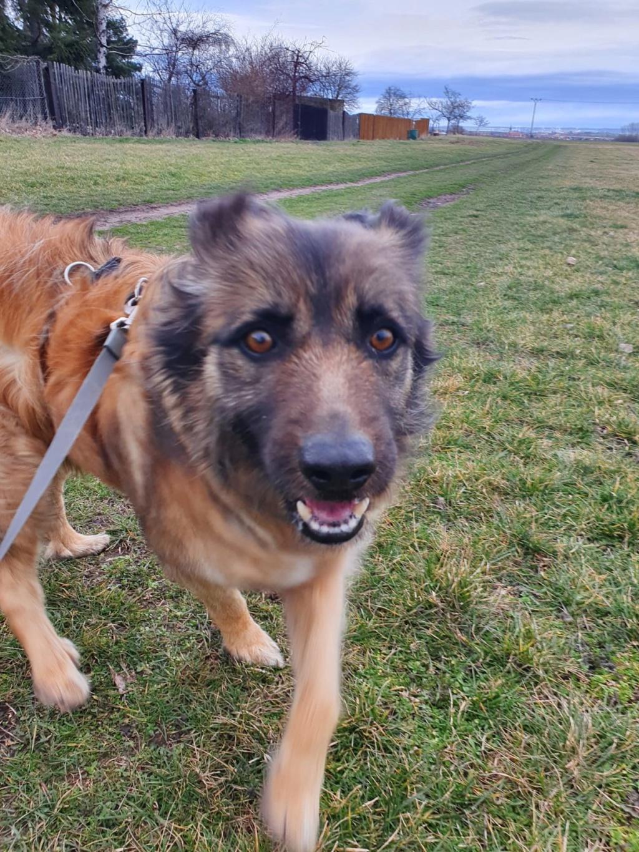 Bildertagebuch - SIRIUS, intelligenter hübscher Hundestern möchte so gerne endlich ein Zuhause - VERMITTELT - Whatsa29