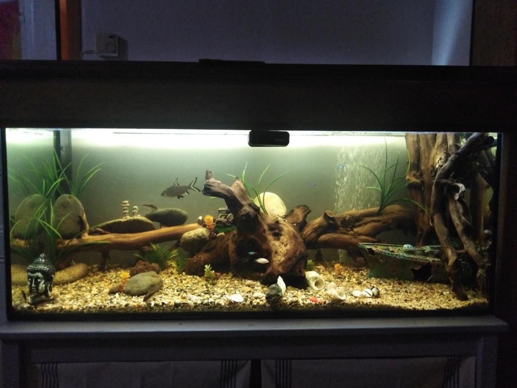 mon 1ER aquarium 15784310